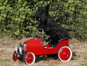 Eduard+im+Auto