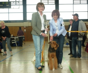 BIS 2013 Airedale