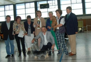 Best in Sho - Dandie Dinmont 2012